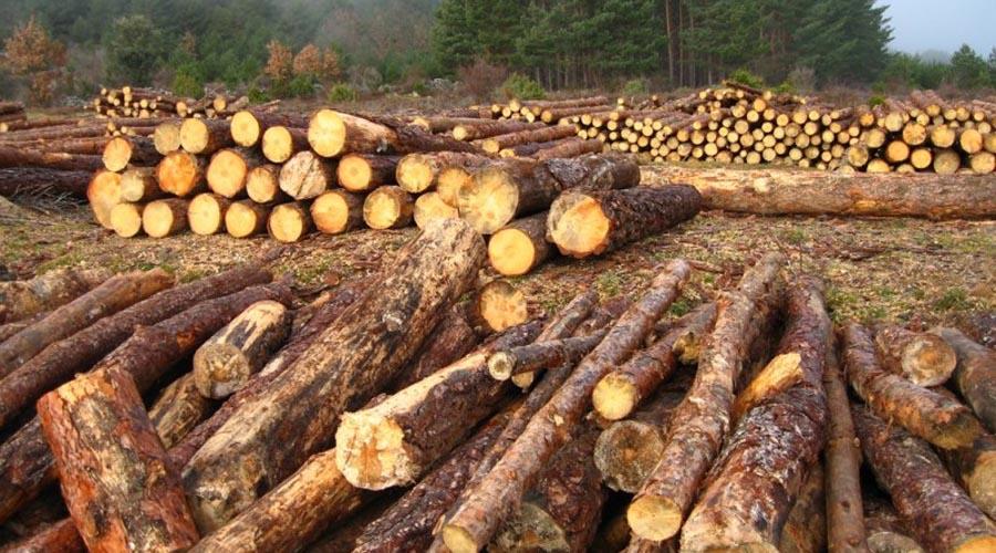 Por delito de ecocidio dos hombres tendrán que sembrar 3 mil árboles y limpiar un río | El Imparcial de Oaxaca