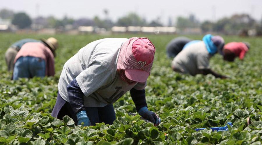 Campesinos mixtecos abastecerán tiendas Diconsa | El Imparcial de Oaxaca
