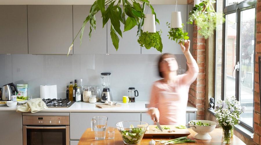 Conoce la lista de plantas que no pueden faltar en tu cocina | El Imparcial de Oaxaca
