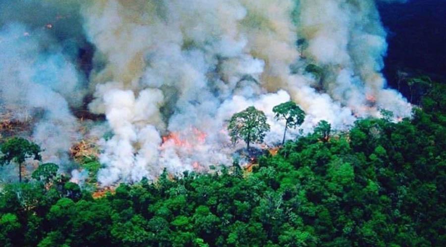 El Amazonas agoniza por incendio forestal   El Imparcial de Oaxaca