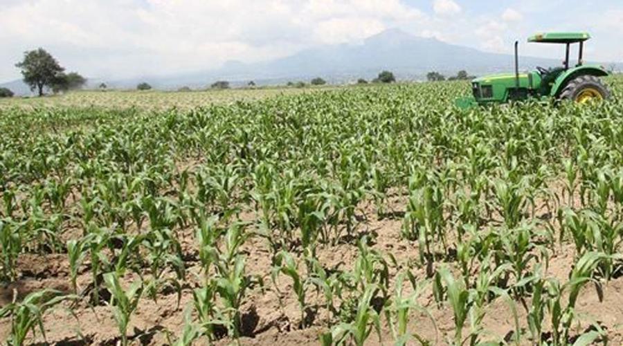 Apoyo al campo e infraestructura son necesidades en la Mixteca | El Imparcial de Oaxaca