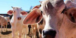 Productores de leche se suman a padrón federal