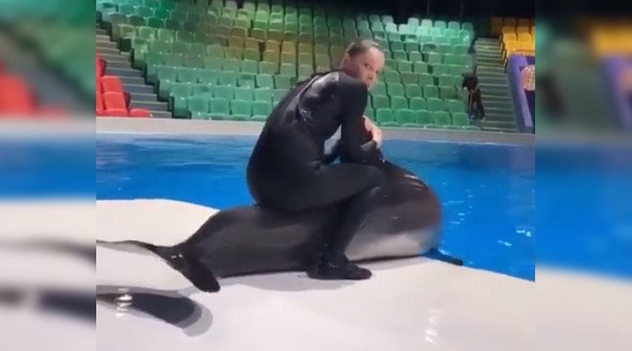 Video: Acusan a entrenadora de maltratar a un delfín | El Imparcial de Oaxaca