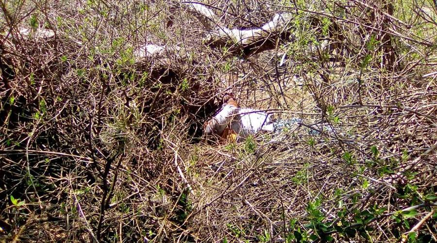 Cadáver sin identificar en Tlacolula termina en fosa común