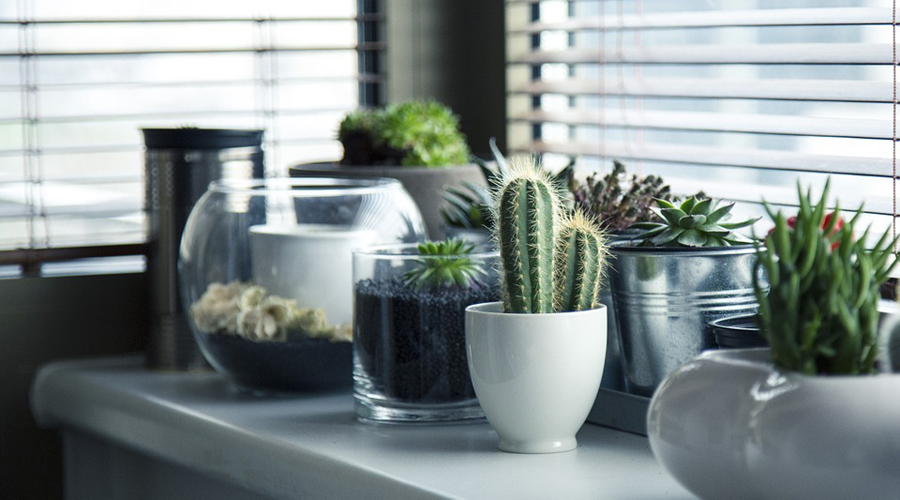 ¿Eres amante de las plantas? ¡Cuidado, no todas son buenas! | El Imparcial de Oaxaca