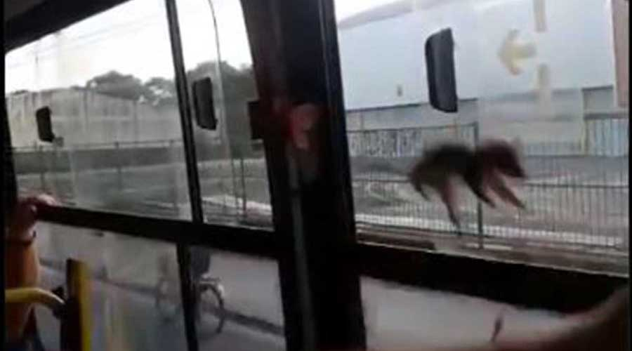 Video: Sorprende roedor viajando en el transporte público   El Imparcial de Oaxaca