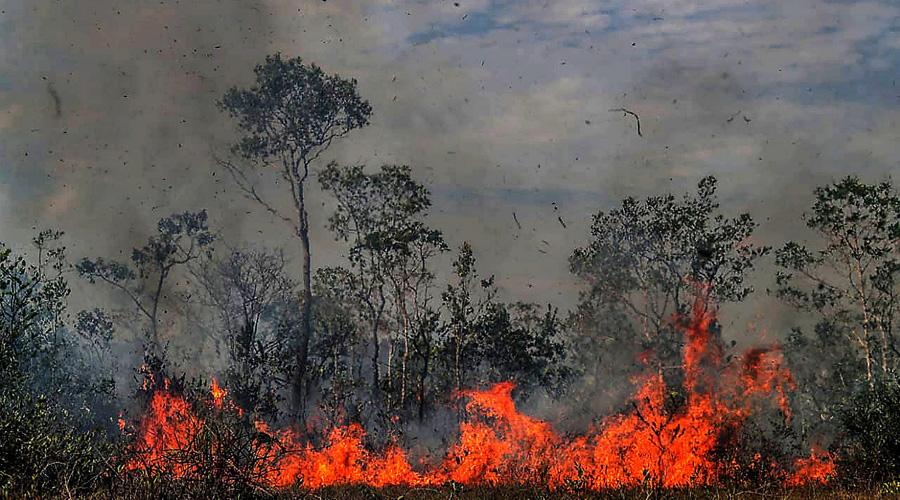 Experto responde dudas sobre el daño sufrido en el Amazonas por incendios   El Imparcial de Oaxaca