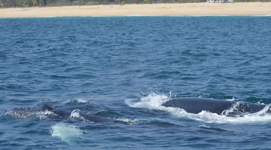 Conoce los lugares declarados para observar a las ballenas en Oaxaca | El Imparcial de Oaxaca
