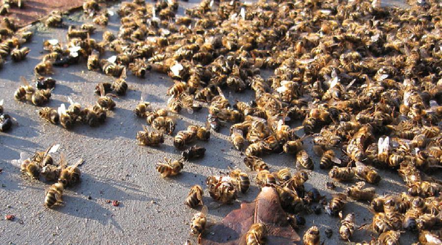 Muerte masiva de abejas en Brasil preocupa a apicultores   El Imparcial de Oaxaca