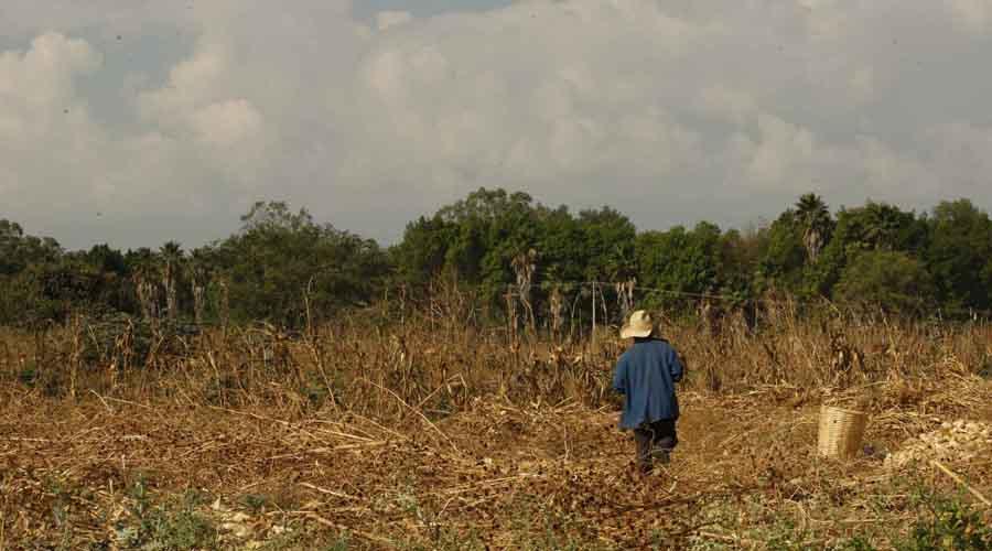 Oaxaca pierde batalla contra cambio climático
