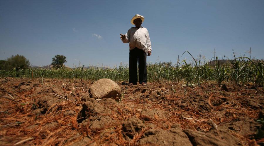 Pega sequía a 237 municipios de Oaxaca, 41 por ciento del territorio estatal   El Imparcial de Oaxaca