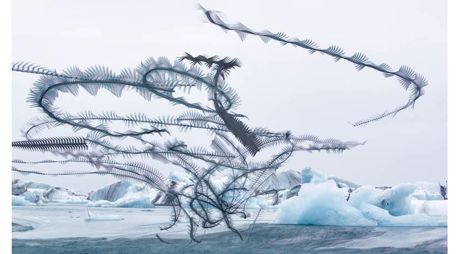 Xavi Bou fotografía el vuelo de las aves
