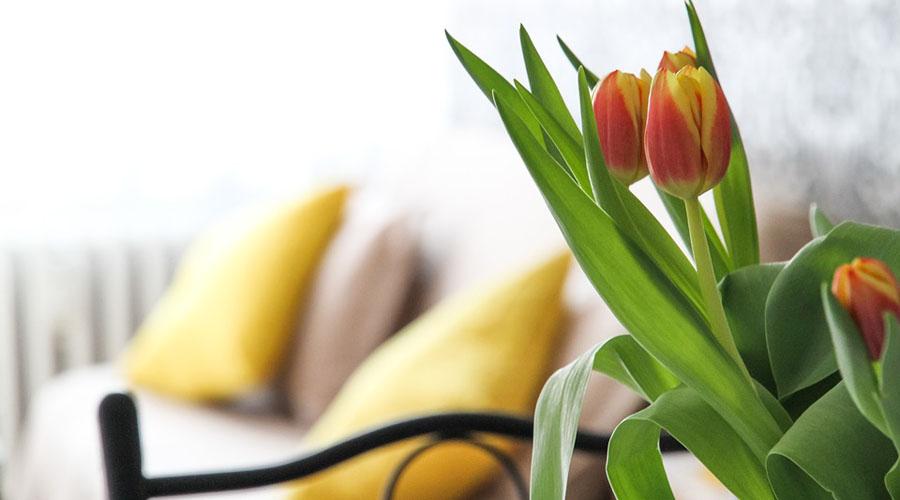 Coloca estas flores en tu habitación para conciliar mejor el sueño   El Imparcial de Oaxaca