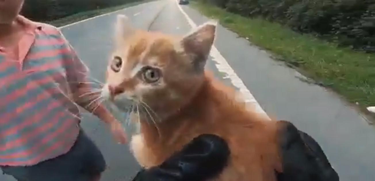Video: Dos hombres detiene el tráfico para salvar a un gatito de ser atropellado | El Imparcial de Oaxaca