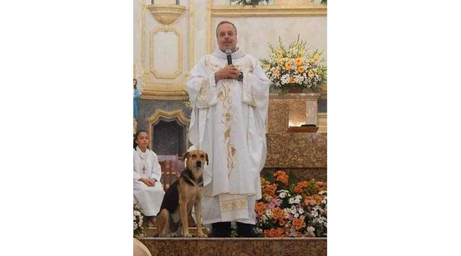 Sacerdote invita a los perros callejeros a la misa del domingo para encontrarles un hogar | El Imparcial de Oaxaca