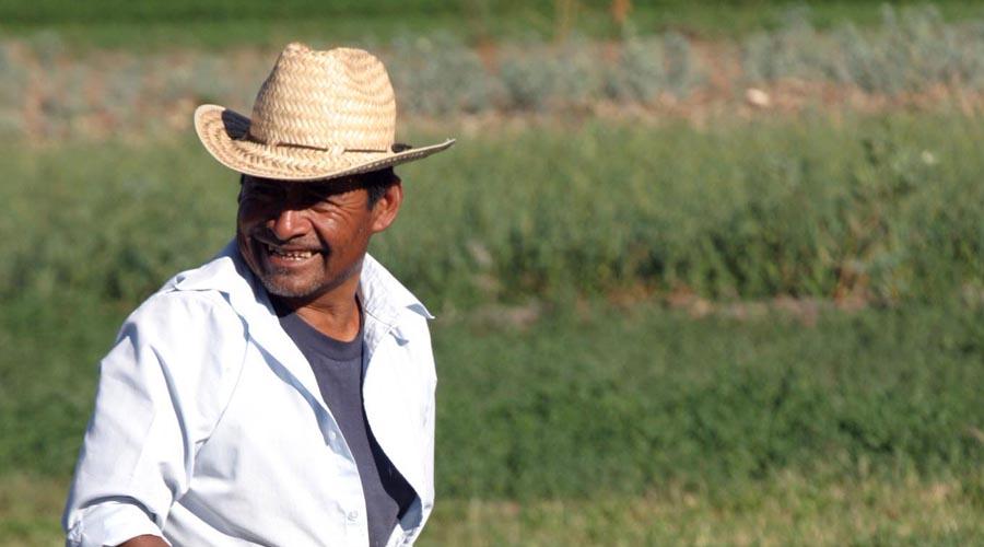 Químicos intoxican campo de Oaxaca
