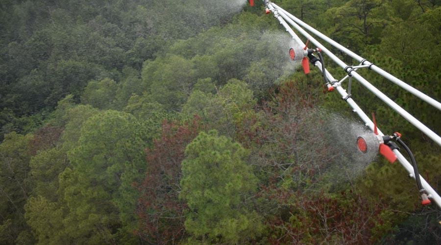 Uso sustentable del bosque en Santa Cruz Itundujia