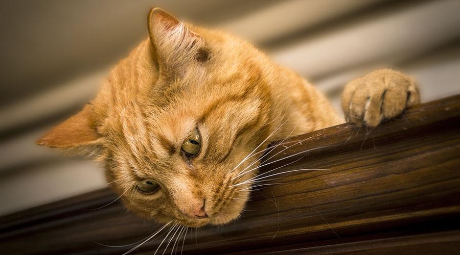 Video: Gato intenta atrapar a ratón y no sale como se esperaba | El Imparcial de Oaxaca