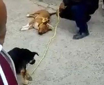Video: Personal del Centro de Bienestar Animal es captado maltratando dos perros