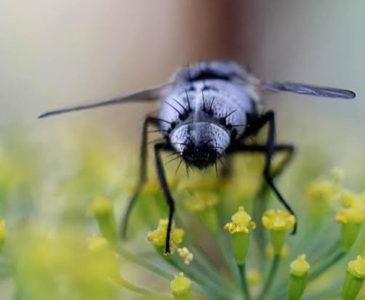 Extinción de insectos llevaría a un Apocalipsis natural