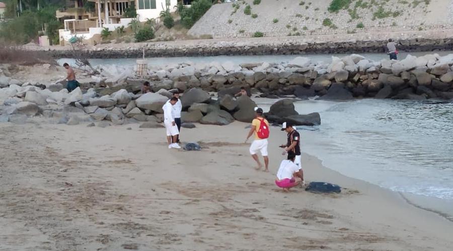 Aparecen tortugas muertas en diferentes playas de Huatulco