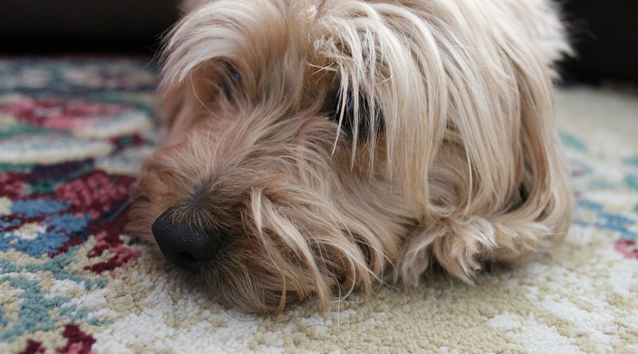 Mujer que mató de hambre a su perro podría ser condenada a cuatro años de prisión | El Imparcial de Oaxaca