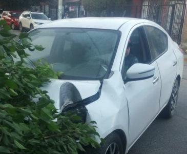 Conductor borracho se estampa contra árbol