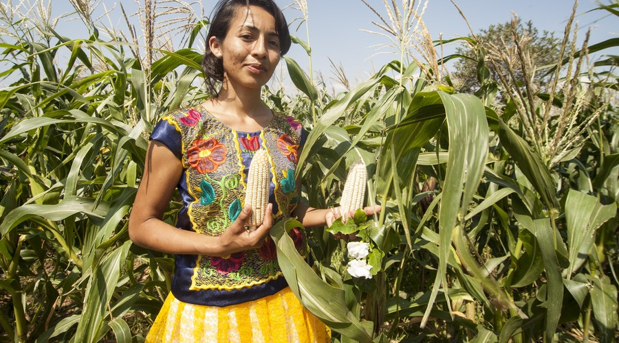 Mejoran cultivos de zapalote chico | El Imparcial de Oaxaca