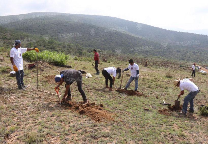 Reforestación del 'Cerro Sagrado de María Sánchez' en San Martín Tilcajete | El Imparcial de Oaxaca