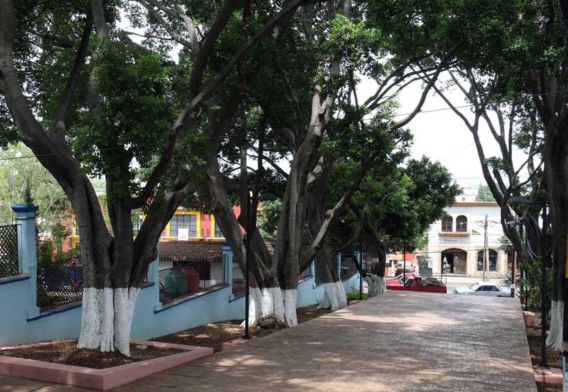 Piden proteger los árboles de Oaxaca   El Imparcial de Oaxaca