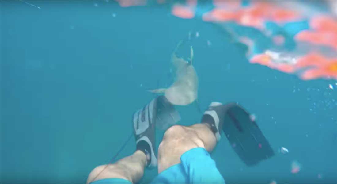 Video: Buzo filma encuentro con tiburón; le desgarra una pierna | El Imparcial de Oaxaca