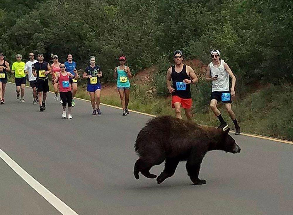 ¡Sorpresa y susto! Un oso se 'cuela' en carrera en EU | El Imparcial de Oaxaca