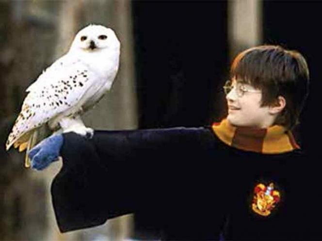 Dos décadas con Harry Potter; 20 años de magia | El Imparcial de Oaxaca