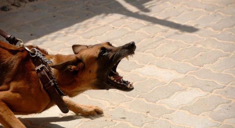 Mujer era devorada por su propio perro   El Imparcial de Oaxaca