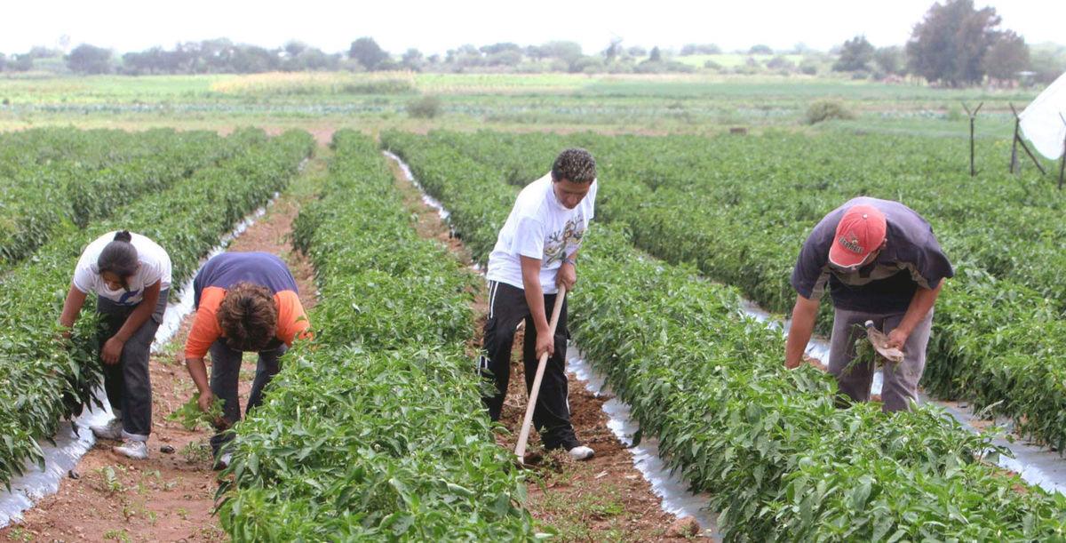 Otorga Sagarpa 27 mil mdp en créditos a productores en lo que va del año   El Imparcial de Oaxaca