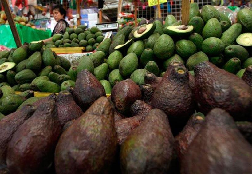 Aguacate mantiene precio de hasta 85 pesos por kilo: Profeco | El Imparcial de Oaxaca
