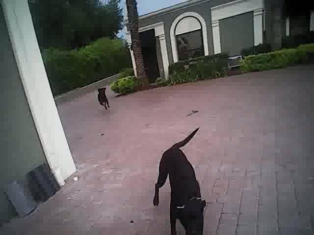 Un policía mata a dos perros mientras comprueba el encendido de la alarma de una propiedad | El Imparcial de Oaxaca