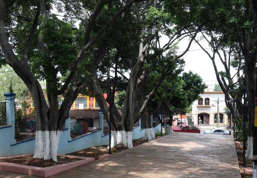 Árboles del Fortín, condenados a morir | El Imparcial de Oaxaca