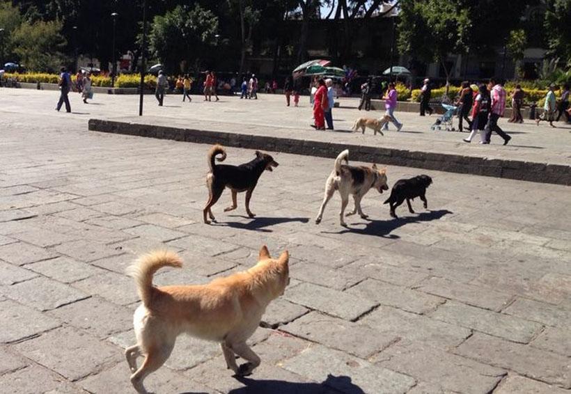 Piden campaña de esterilización canina en Oaxaca | El Imparcial de Oaxaca