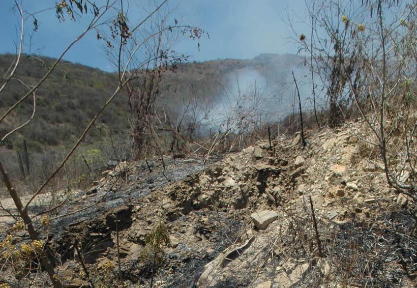 Alarma por acelerada deforestación en Oaxaca   El Imparcial de Oaxaca