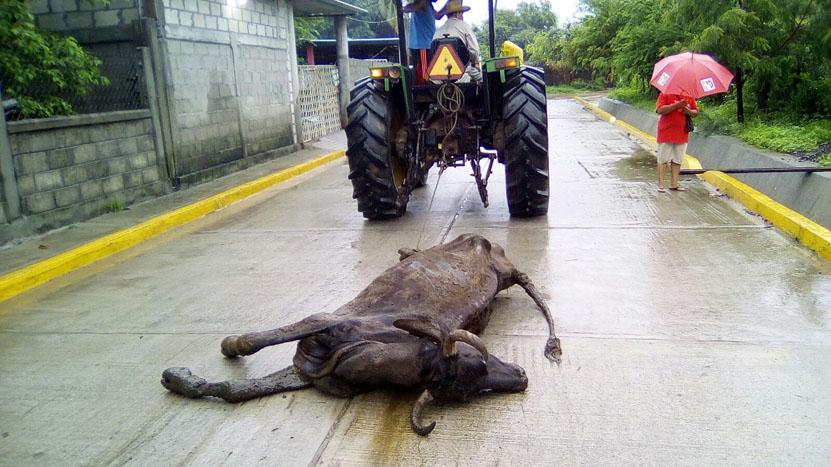 Presentan denuncia contra  Pemex por muerte de reses en Salina Cruz | El Imparcial de Oaxaca
