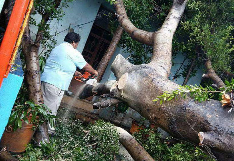 Rescatan a familias atrapadas por caída de árbol en el Istmo | El Imparcial de Oaxaca