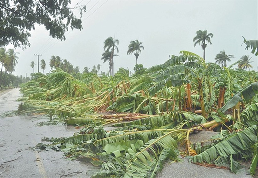 Atiende Sedapa afectaciones  al campo ante las tormentas en la Cuenca   El Imparcial de Oaxaca