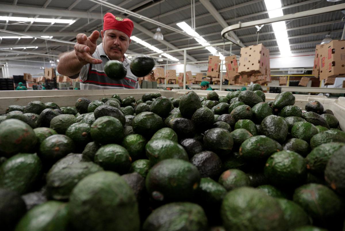 Aguacate mantiene precio a la venta de 85 pesos por kilo: Profeco   El Imparcial de Oaxaca