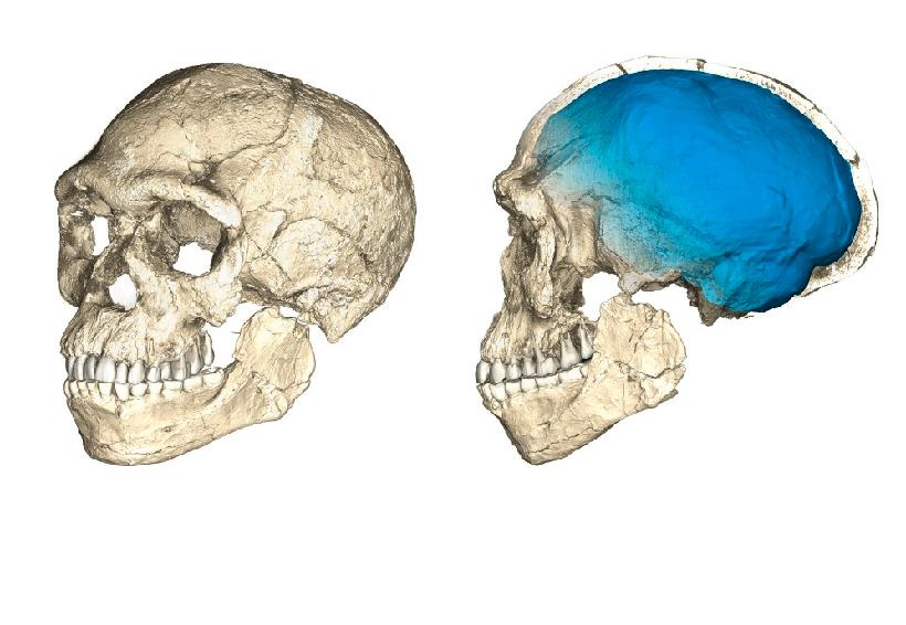 Un descubrimiento histórico revela que el Homo sapiens nació en Marruecos | El Imparcial de Oaxaca