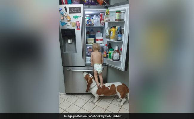 Video: Trabajo en equipo: un bebé se sube en su perro para abrir un refrigerador | El Imparcial de Oaxaca