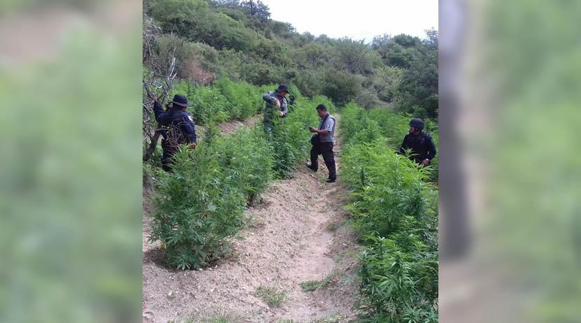 Queman mariguana | El Imparcial de Oaxaca