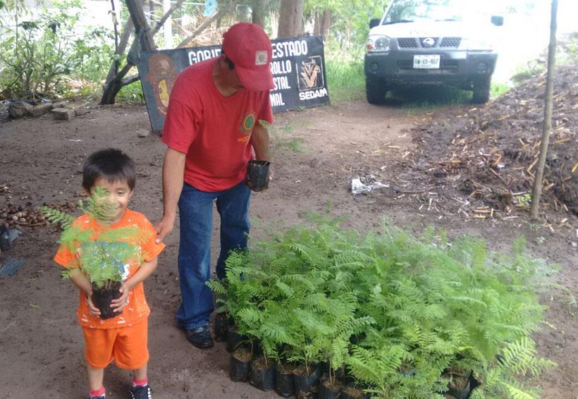 Llaman a reforestar la Mixteca | El Imparcial de Oaxaca