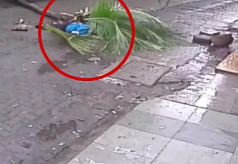 Video: Palmera cae y aplasta a una mujer | El Imparcial de Oaxaca