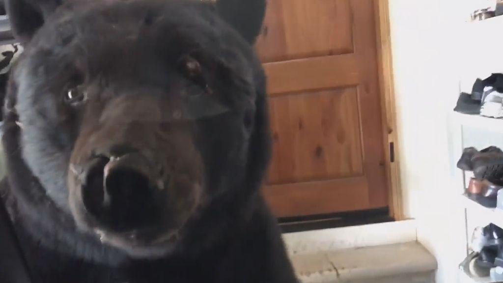 Video del encuentro de una mujer de Colorado con uno oso pardo en su garaje   El Imparcial de Oaxaca